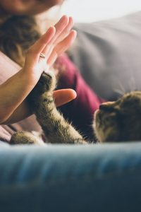 cat high five woman