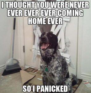Dog sitting by broken door
